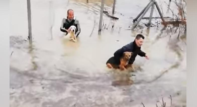Il salvataggio di 250 cani dall'alluvione