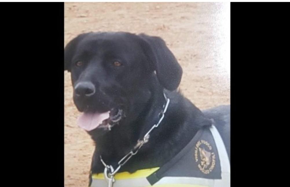 """È morto Tommy, il cane eroe che salvò le vittime del terremoto dell'Aquila: """"Uno di noi"""""""