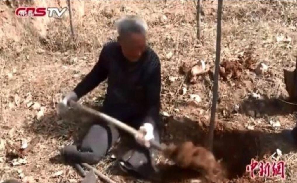 """Anziano senza gambe pianta 17mila alberi: """"Lo faccio per le generazioni future"""""""