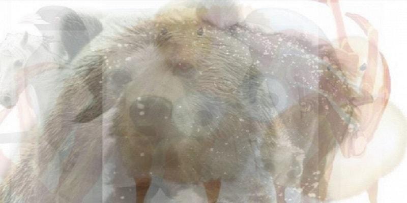 Test della personalità: 7 animali per svelare la tua personalità