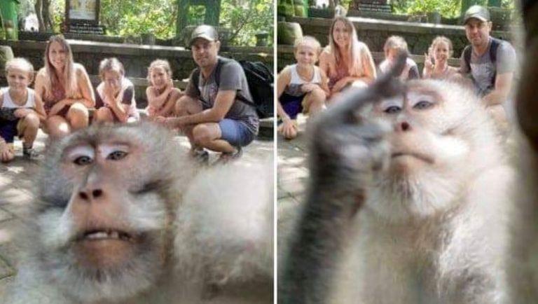 Scimmia afferra macchina fotografica per fare un selfe con la famiglia, e alza il dito medio