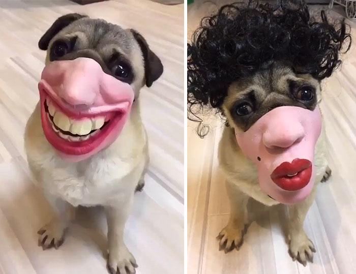 Amazon sta vendendo museruole di cani che sembrano visi umani