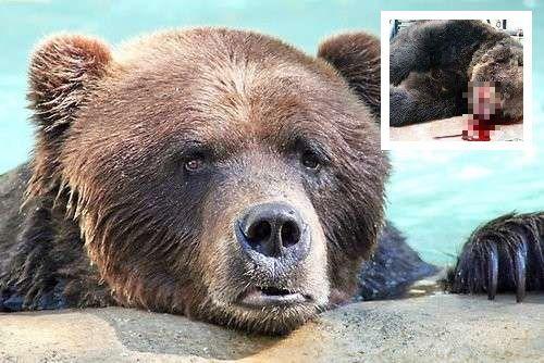 La lettera dell'orso M-49 che sta facendo il giro del web