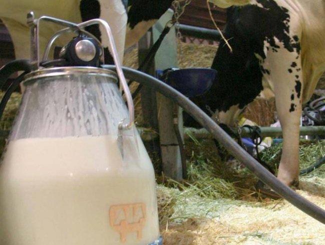 """Pieno di antibiotici"", Latte italiano contaminato: ecco tut"