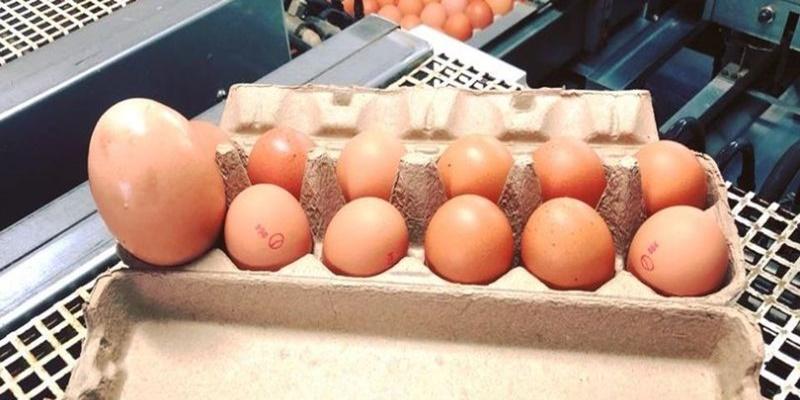 """""""Sconvolgente"""". Una scoperta assurda. Un contadino trova un uovo enorme sotto una gallina: quando si schiude, non può credere ai suoi occhi"""