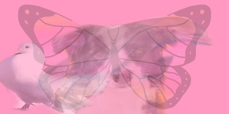 Il primo animale che vedi nella foto, rivela molto su chi sei realmente