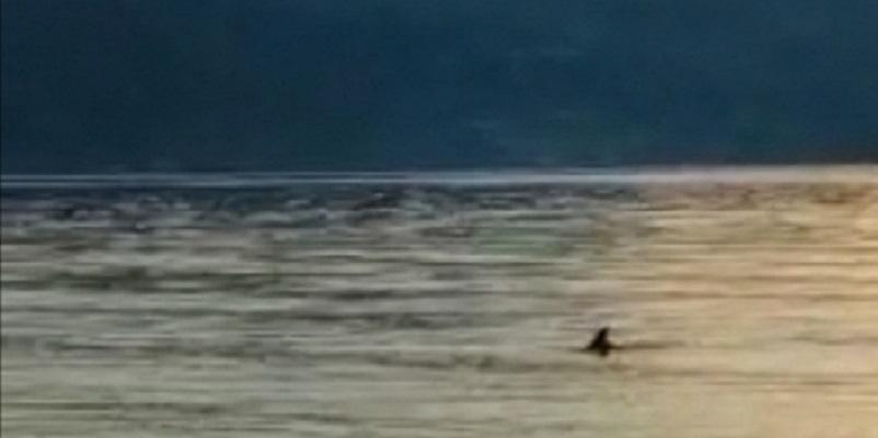 Italia, avvistato il Diavolo al mare: le immagini sono impressionanti (Video)