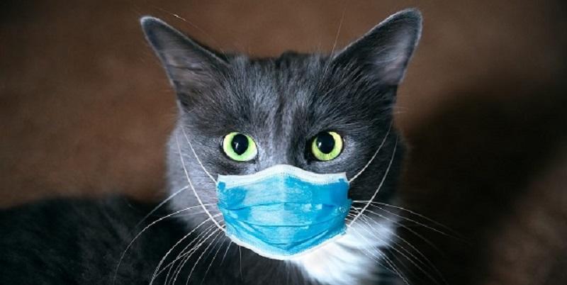 Coronavirus, gatto risultato positivo al tampone: è il primo.