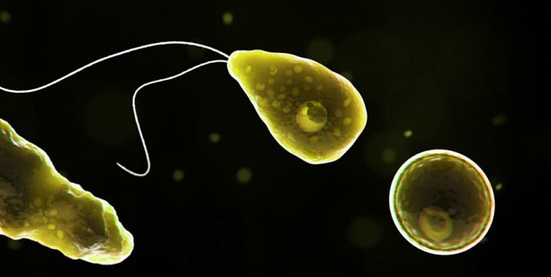 """Ameba mangia cervello nella rete idrica: """"Non usate l'acqua del rubinetto"""""""
