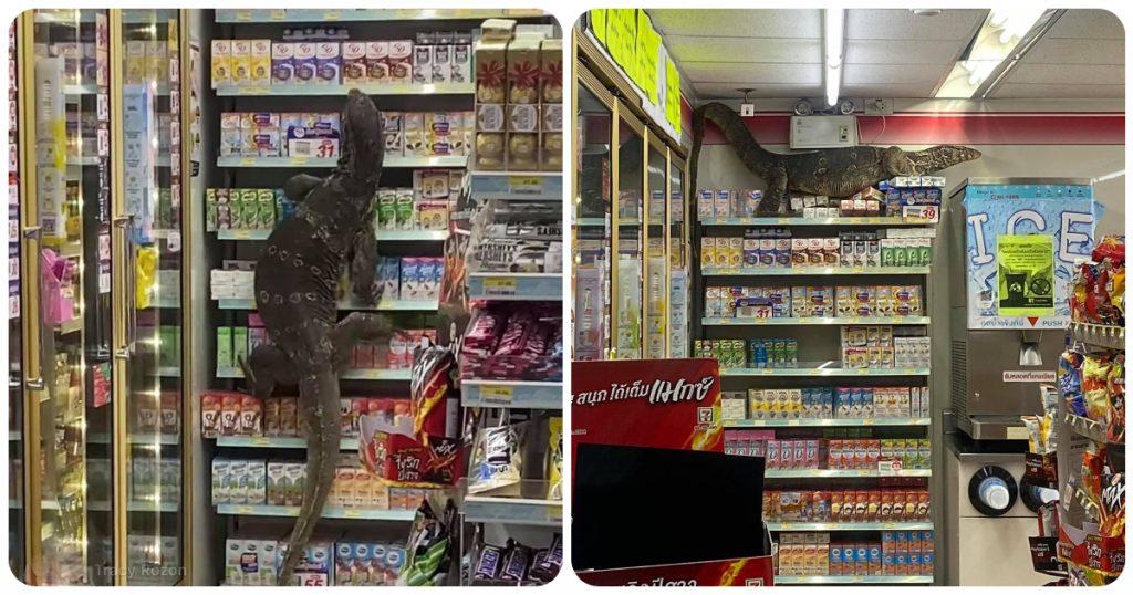 Mai visto nulla del genere, lucertola gigante scatena il panico al supermercato: il video
